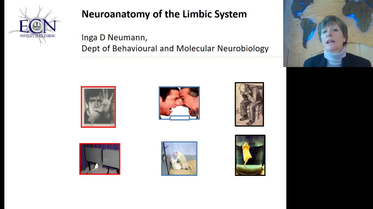 Neuroanatomy of the Limbic System