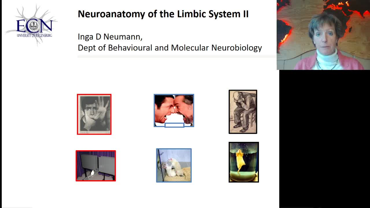 Neuroanatomy ot the Limbic System II