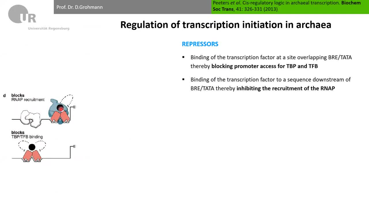 Lecture 7_part 1: Regulation of transcription initiation in Archaea