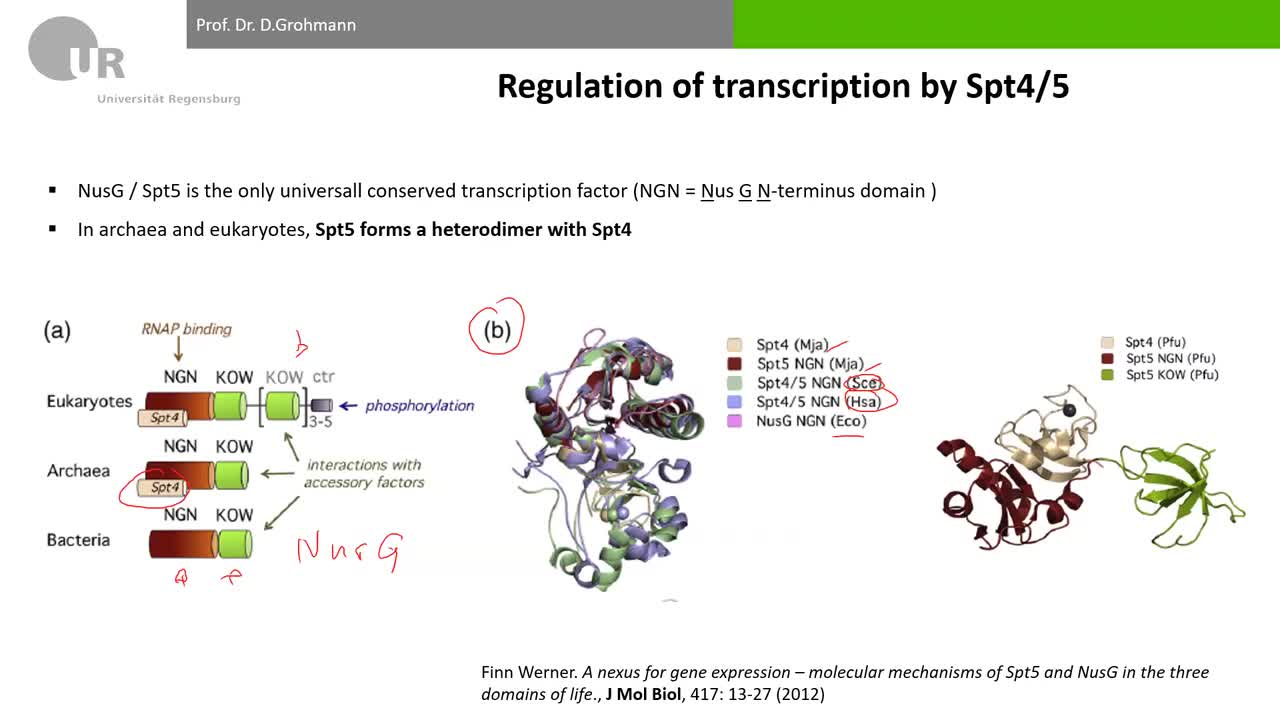 Lecture 7_part 2: Transcription elongation and termination in Archaea