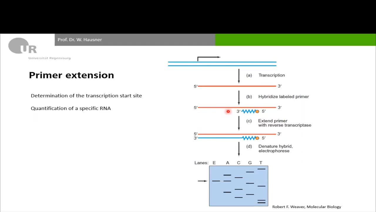 1_DNA protein interaction I