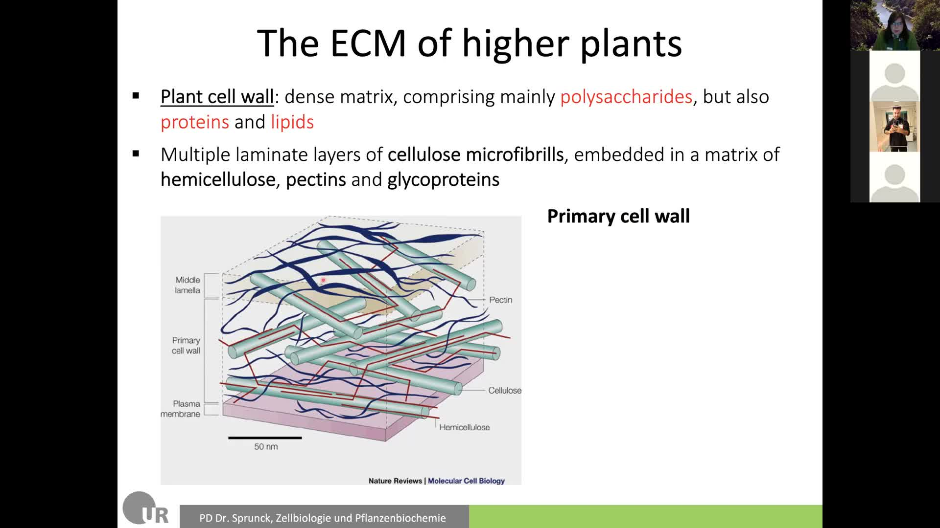 9. ECM and Cell Adhesion 1