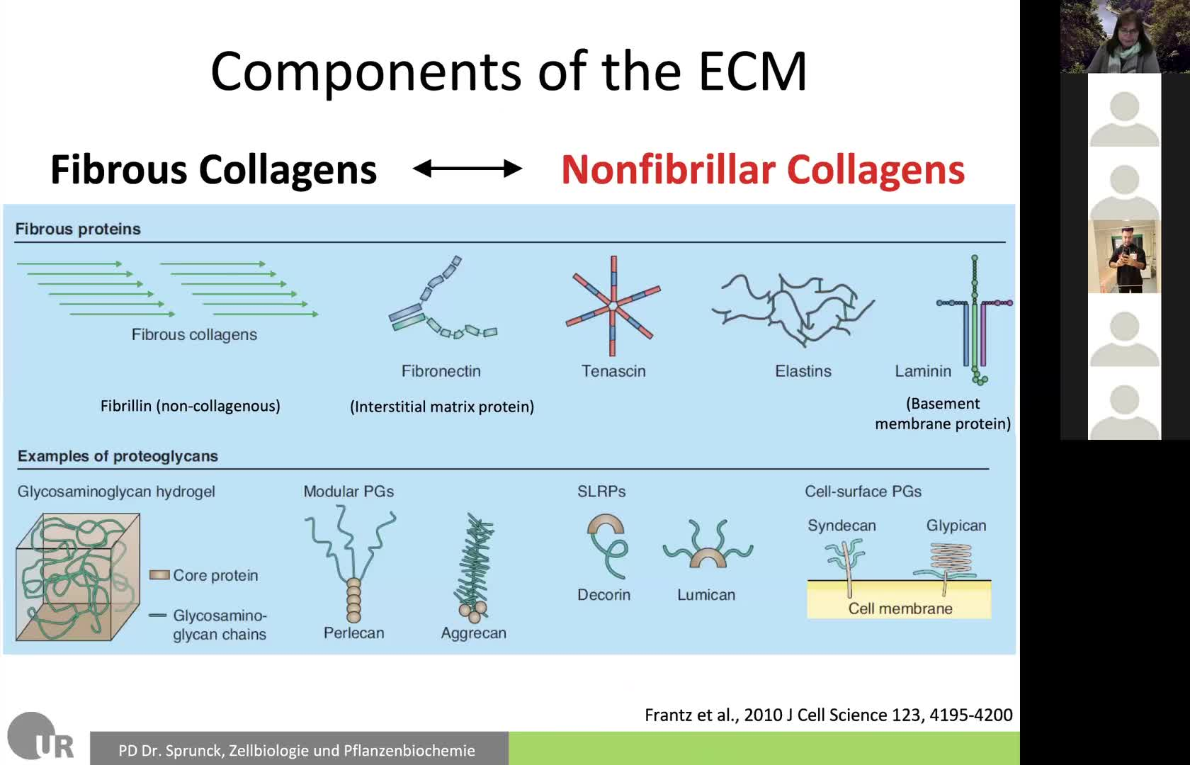 10. ECM and Cell Adhesion 2